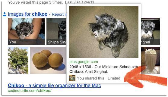 תמונות מגוגל פלוס בתוצאות החיפוש