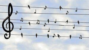 צ'טים בשידור חי למשתמשי טוויטר עם 600 עוקבים ומעלה
